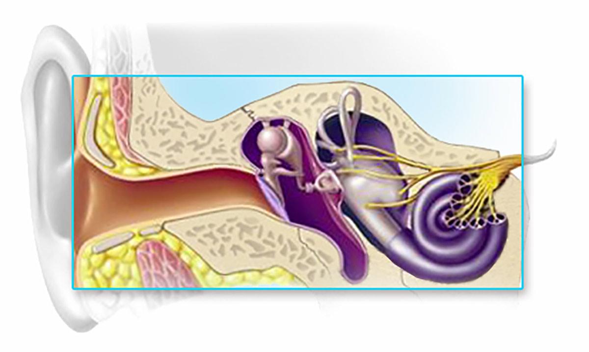 A halláscsökkenés típusai